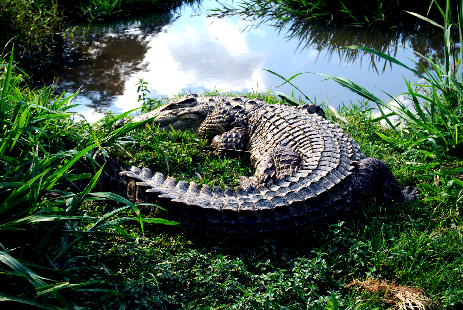 DSC_0115- Croc